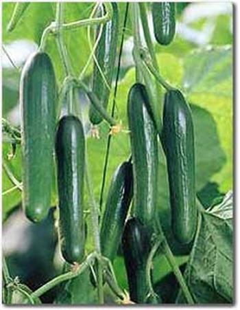 - De komkommers ...
