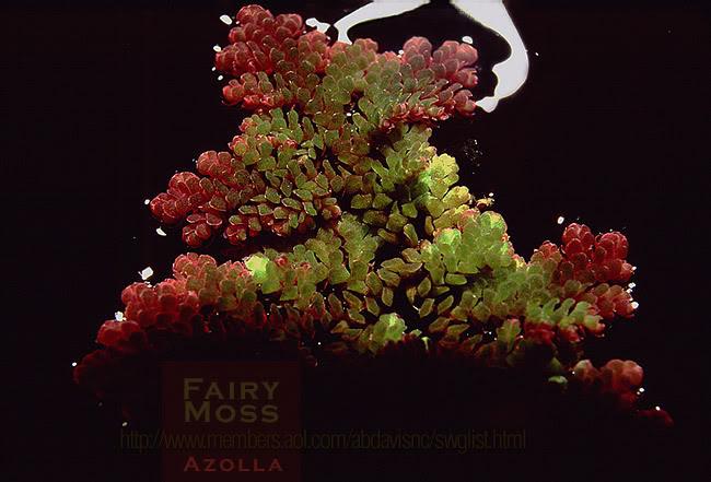 گیاهان آبزی و مناسب آکواریوم موجود در بازار