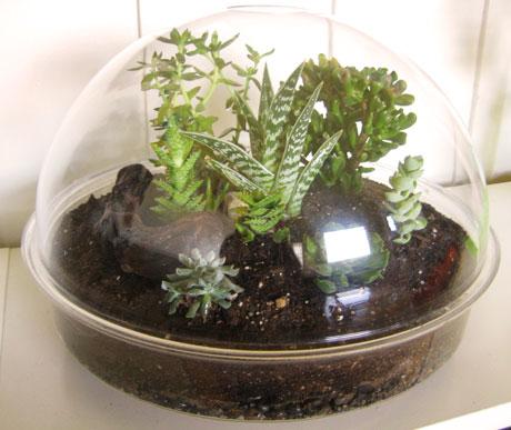گلکاری درون شیشه یا تراریوم - سبز نیوزدر تراریوم های بسته فاصله آبیاری می تواند 1 ماه یا بیشتر باشد. در بیشترین  حالت، به آبیاری در هر دو هفته یک بار نیاز دارید، که این به شرایط بستگی دارد  .