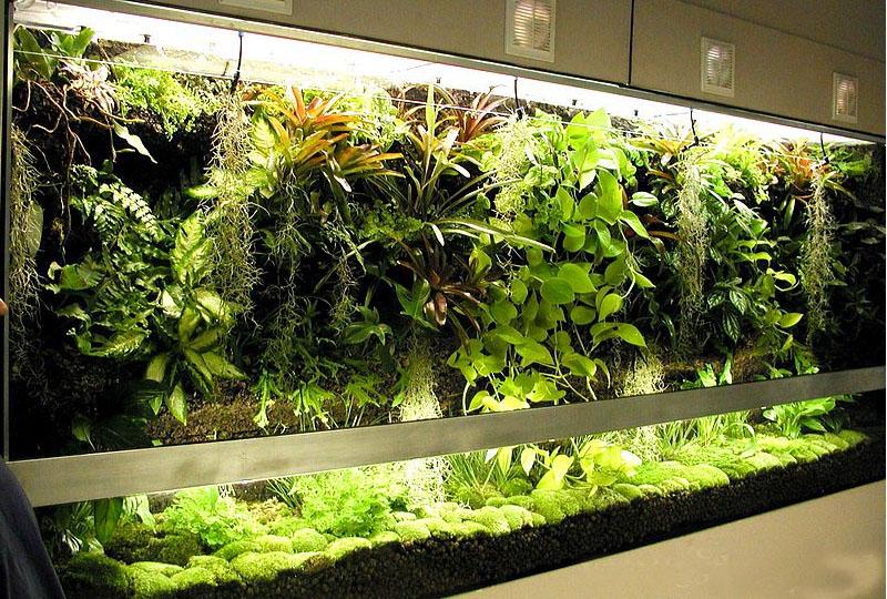 کلینیک گیاه پزشکی آدنیس - تراریوم(باغ شیشه ای)