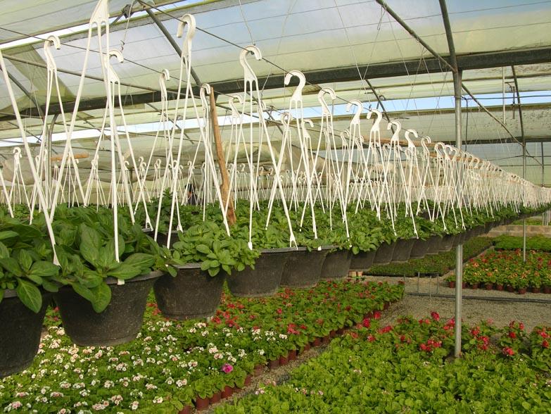 اولین گلخانه با تکنولوژی نوین در دانشگاه یزد ساخته شد